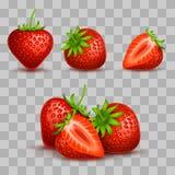 Διανυσματική ρεαλιστική γλυκιά και φρέσκια φράουλα που απομονώνεται στο διαφανές υπόβαθρο απεικόνιση αποθεμάτων