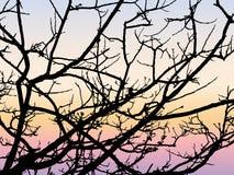 Διανυσματική σκιαγραφία κλάδων φθινοπώρου μαύρη Στοκ Εικόνες