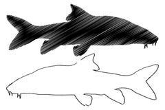 Διανυσματική σκιαγραφία των ψαριών βάρβων ελεύθερη απεικόνιση δικαιώματος