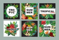 Διανυσματική συλλογή με τις έξι κάρτες, σημειώσεις και εμβλήματα με τα εξωτικά λουλούδια, τα φυτά και τα φύλλα απεικόνιση αποθεμάτων