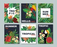 Διανυσματική συλλογή με τις έξι κάρτες, σημειώσεις και εμβλήματα με τα toucan, εξωτικά λουλούδια, τα φυτά και τα φύλλα διανυσματική απεικόνιση