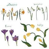 Διανυσματική συλλογή των απομονωμένων λουλουδιών άνοιξη στο λευκό ελεύθερη απεικόνιση δικαιώματος