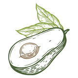 Διανυσματική συρμένη χέρι διανυσματική απεικόνιση φετών αβοκάντο Τροπικό θερινό χαραγμένο φρούτα ύφος Λεπτομερές σχέδιο τροφίμων  απεικόνιση αποθεμάτων