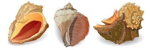Διανυσματική συλλογή θαλασσινών κοχυλιών Στοκ Εικόνες