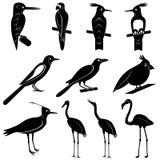 Διανυσματική συλλογή των σκιαγραφιών πουλιών διανυσματική απεικόνιση