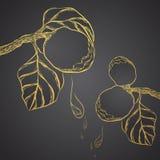 Διανυσματική χρυσή περίληψη ομορφιάς χορταριών Mahad Artocarpus Στοκ εικόνες με δικαίωμα ελεύθερης χρήσης