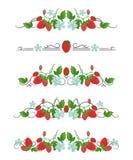 Διανυσματικοί διαιρέτες κειμένων με τη φράουλα και το λουλούδι Στοκ Φωτογραφία