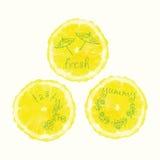 Διανυσματικοί κύκλοι φετών watercolor πορτοκαλιοί, συρμένα χέρι doodle στοιχεία Στοκ φωτογραφίες με δικαίωμα ελεύθερης χρήσης
