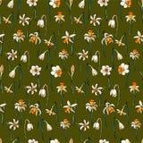 Διανυσματικοί floral νάρκισσοι μορίων απεικόνισης διανυσματική απεικόνιση