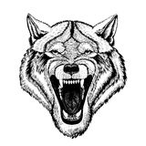 Διανυσματικός άγριος λύκος για τη δερματοστιξία, μπλούζα, αθλητικό λογότυπο απεικόνιση αποθεμάτων