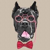 Διανυσματικός αστείος κάλαμος Corso σκυλιών κινούμενων σχεδίων hipster απεικόνιση αποθεμάτων