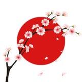 Διανυσματικός κλάδος sakura, ιαπωνική σημαία Στοκ Εικόνες