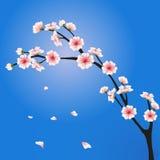 Διανυσματικός κλάδος sakura Στοκ εικόνες με δικαίωμα ελεύθερης χρήσης