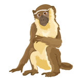 Διανυσματικός πίθηκος συνεδρίασης που απομονώνεται ελεύθερη απεικόνιση δικαιώματος