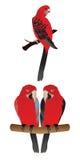 Διανυσματικός παπαγάλος Στοκ εικόνα με δικαίωμα ελεύθερης χρήσης