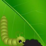 Διανυσματικός caterpilar στο πράσινο μακρο υπόβαθρο φύλλων. Στοκ Φωτογραφία