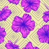 Διανυσματικό άνευ ραφής γεωμετρικό σχέδιο με τα φωτεινά πορφυρά hibiscus λουλούδια στο κίτρινο υπόβαθρο απεικόνιση αποθεμάτων