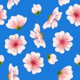 Διανυσματικό άνευ ραφής μπλε σχέδιο sakura Στοκ Εικόνες