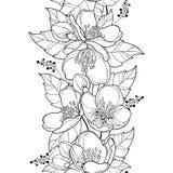 Διανυσματικό άνευ ραφής σχέδιο με τη δέσμη λουλουδιών της Jasmine περιλήψεων, τον οφθαλμό και το περίκομψο φύλλο στο Μαύρο στο άσ ελεύθερη απεικόνιση δικαιώματος