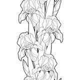 Διανυσματικό άνευ ραφής σχέδιο με το λουλούδι, τον οφθαλμό και το φύλλο της Iris περιλήψεων στο Μαύρο στο άσπρο υπόβαθρο floral ί απεικόνιση αποθεμάτων