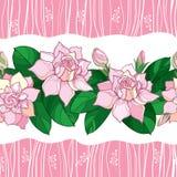 Διανυσματικό άνευ ραφής σχέδιο με το λουλούδι Gardenia περιλήψεων στο ρόδινο χρώμα κρητιδογραφιών Περίκομψος οφθαλμός και πράσινα ελεύθερη απεικόνιση δικαιώματος