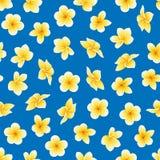 Διανυσματικό άνευ ραφής σχέδιο με το λουλούδι Plumeria ή Frangipani στο μπλε διανυσματική απεικόνιση