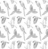 Διανυσματικό άνευ ραφής σχέδιο του μαύρου συρμένου χέρι παπαγάλου γραμμών μελανιού που πετά και που κάθεται στο άσπρο υπόβαθρο διανυσματική απεικόνιση