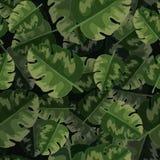 Διανυσματικό άνευ ραφής σχέδιο των πράσινων φύλλων φοινικών και των τροπικών φυτών απεικόνιση αποθεμάτων