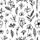 Διανυσματικό άνευ ραφής σχέδιο των τροπικών λουλουδιών που απομονώνεται στο άσπρο υπόβαθρο διανυσματική απεικόνιση