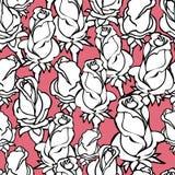 Διανυσματικό άνευ ραφής σχέδιο με τα άσπρα τριαντάφυλλα σκιαγραφιών στο ροδαλό υπόβαθρο Απεικόνιση αποθεμάτων
