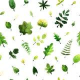 Διανυσματικό άνευ ραφής σχέδιο με τα πράσινα φύλλα που χρωματίζονται με τα watercolors στο άσπρο υπόβαθρο ελεύθερη απεικόνιση δικαιώματος