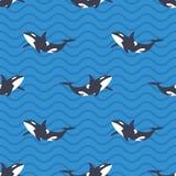 Διανυσματικό άνευ ραφής σχέδιο με τις φάλαινες ή τα orcas δολοφόνων στη θάλασσα ελεύθερη απεικόνιση δικαιώματος