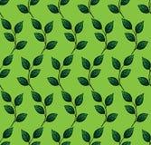 Διανυσματικό άνευ ραφής σχέδιο με το φύλλο Πράσινη ανασκόπηση Στοκ φωτογραφίες με δικαίωμα ελεύθερης χρήσης