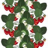 Διανυσματικό άνευ ραφής χρωματισμένο σχέδιο φρούτων Στοκ Εικόνες