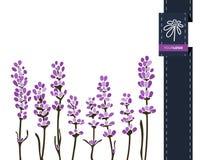 Διανυσματικό έμβλημα χαιρετισμού λουλουδιών με lavender και την κορδέλλα Διεθνής ημέρα γυναικών ` s Επίπεδο ύφος απεικόνιση αποθεμάτων