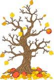 Διανυσματικό δέντρο μηλιάς φθινοπώρου Συλλογή δέντρων Εποχή δέντρων Στοκ φωτογραφίες με δικαίωμα ελεύθερης χρήσης
