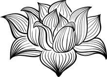 Διανυσματικό γραπτό λουλούδι Lotus Στοκ Εικόνες