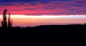 Διανυσματικό δάσος ηλιοβασιλέματος τοπίων Στοκ Φωτογραφία