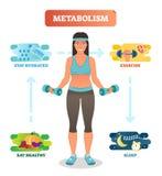 Διανυσματικό διάγραμμα απεικόνισης έννοιας μεταβολισμού, βιοχημικός κύκλος σωμάτων Τρώγοντας το υγιές, πόσιμο νερό, ασκώντας και  απεικόνιση αποθεμάτων