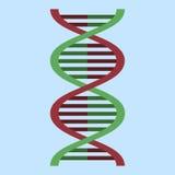 Διανυσματικό εικονίδιο DNA έγχρωμης εικονογράφησης επίπεδο Στοκ Εικόνες