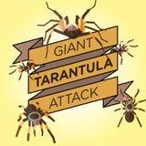 Διανυσματικό επίπεδο διακριτικό κορδελλών tarantula σκιαγραφιών Στοκ Εικόνες