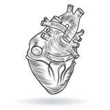 Διανυσματικό κουμπί ή εικονίδιο μιας ανθρώπινης καρδιάς Στοκ εικόνες με δικαίωμα ελεύθερης χρήσης