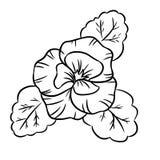 Διανυσματικό μαύρο περίγραμμα των pansy λουλουδιών Απομονωμένο διανυσματικό πρότυπο Εικονίδιο Ιστού απεικόνιση αποθεμάτων