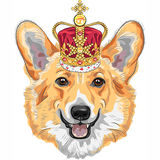 Διανυσματικό ουαλλέζικο corgi Pembroke σκυλιών σκίτσων που χαμογελά στη χρυσή κορώνα Στοκ Εικόνα