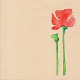 Διανυσματικό λουλούδι παπαρουνών watercolor Στοκ εικόνα με δικαίωμα ελεύθερης χρήσης