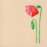 Διανυσματικό λουλούδι παπαρουνών watercolor Στοκ φωτογραφία με δικαίωμα ελεύθερης χρήσης