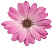 Διανυσματικό λουλούδι Στοκ εικόνες με δικαίωμα ελεύθερης χρήσης