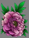 Διανυσματικό λουλούδι Peony Στοκ Φωτογραφία