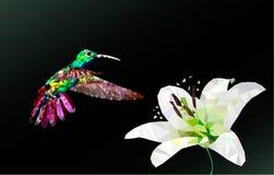 Διανυσματικό πολύγωνο κολιβρίων και λουλουδιών διανυσματική απεικόνιση
