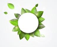 Διανυσματικό πράσινο έμβλημα φύλλων Στοκ Φωτογραφίες